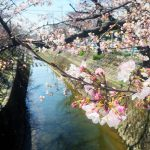春のお花見!スマホ撮影講座終了٩( 'ω' )و めっちゃ桜綺麗でした️ ちょっとした、コツと加工でセンスない、はまっちょでもここまで、撮れました٩( 'ω' )و こはる先生️ありがとう( ^ω^ )  次回は、5/7です٩( 'ω' )و ▼詳しくはこちらhttps://www.clusterofstars.com/photo/#名古屋 #スマホ #iphone #android #スマホ写真 #おしゃれ #写真撮る人と繋がりたい #写真撮ってる人と繋がりたい #写真好きな人と繋がりたい #写真撮影講座 #桜 #花見 #桜撮影